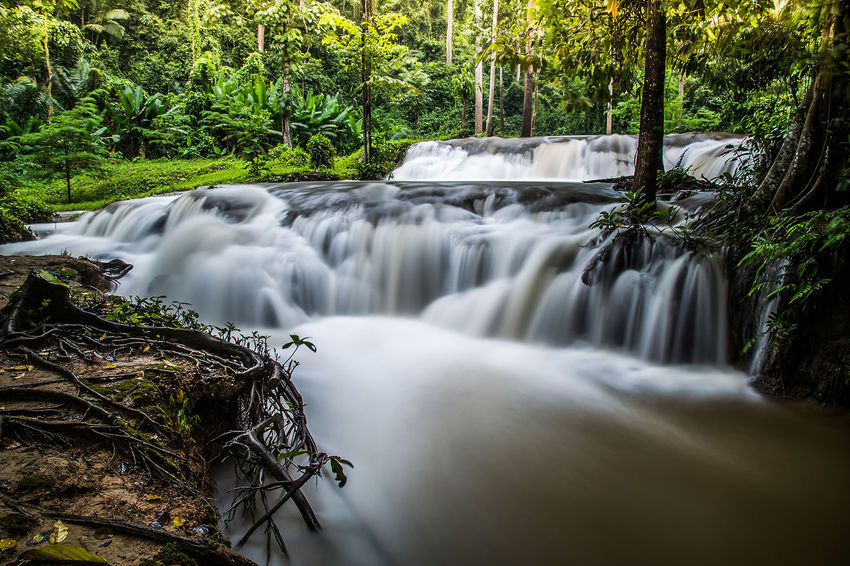 Tree Water Waterfall Motion Forest Long Exposure Rapid Flowing Dam Power In Nature