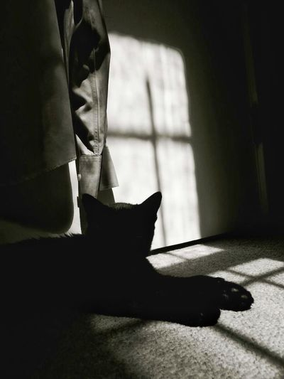 Shadow Kitten Black And White Black Cat Collection Black Cat