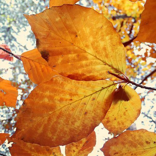 Last leaves IPSFall