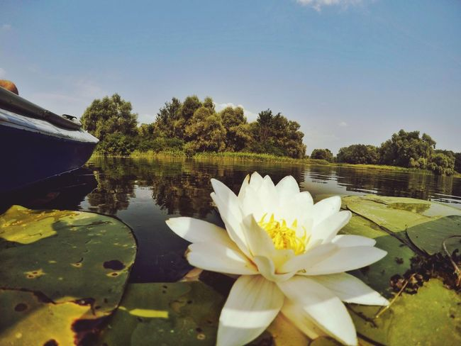 Lake Lilly Lilly Lillypads Lake Lake View Nature Nature Photography Relaxing Life