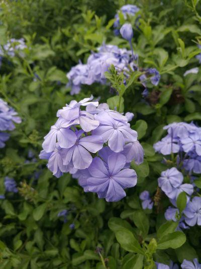 First Eyeem Photo Flower Flowers Colorful Huawei P9 Plus