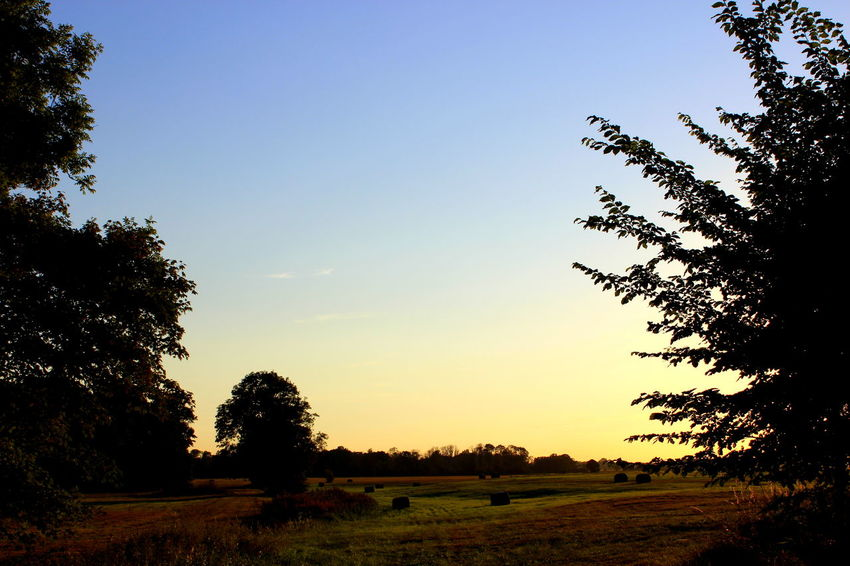Beauty In Nature Blue Clear Sky Field Grass Growth Horizon Over Land Idyllic Landscape Nature No People Non Urban Scene Non-urban Scene Outdoors Remote Rural Scene Scenics Sky Sunset Tranquil Scene Tranquility Tree