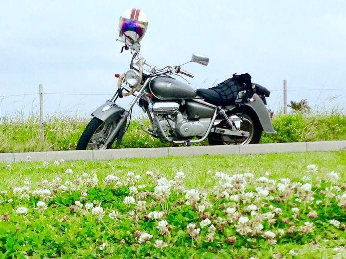 オートバイ アメリカンバイク おーとばいく Motorcycle Auto Bike 芝生 野原 沖縄 Okinawa Japan 那覇 Lawn