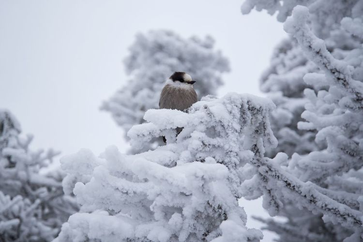 Close-up of bird perching on snow against sky
