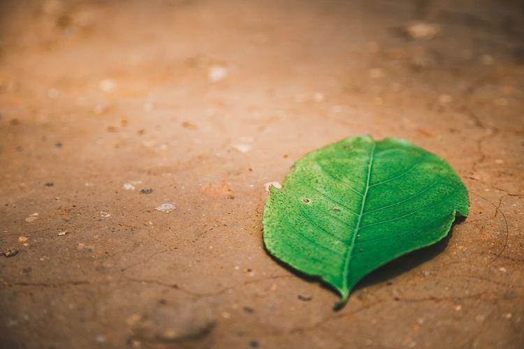 Fallen green leaf on surface