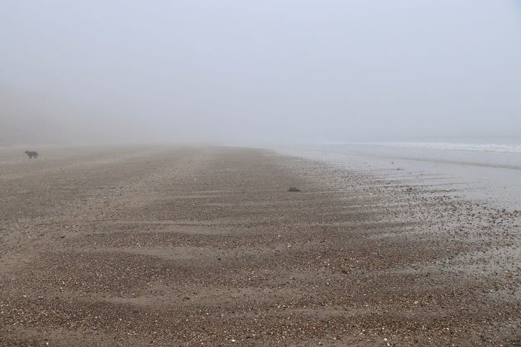 Bleak shingle beach Beach Beauty In Nature Bleak Day Environment Falling Tide Fog Foggy Horizon Land Landscape Lost Dog Mist Nature No People Non-urban Scene Outdoors Sand Scenics - Nature Sea Shingle Sky Tranquil Scene Tranquility Water