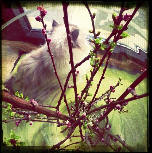 thatsmeee Cat Pets