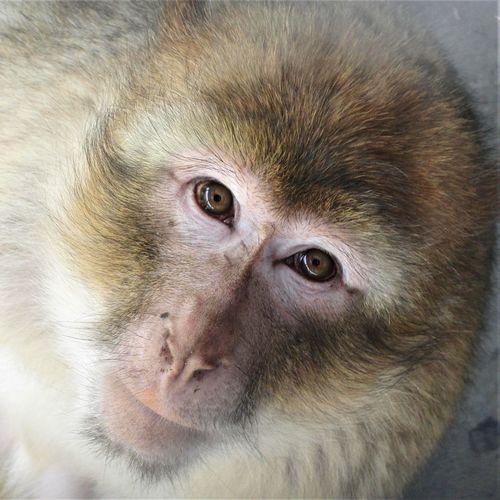 Zoo Animal Body Part Animal Eye Animal Hair Baboon Close-up Hair Looking Looking At Camera Mammal No People One Animal Portrait Primate Vertebrate Zoology