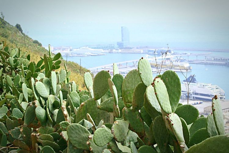 ❤️ Barcelona Sea Water Nature Day Growth Outdoors Green Color Barcelona Beauty In Nature Built Structure Plant Nautical Vessel No People Building Exterior Scenics Leaf Sky Horizon Over Water City Cityscape Horrizon