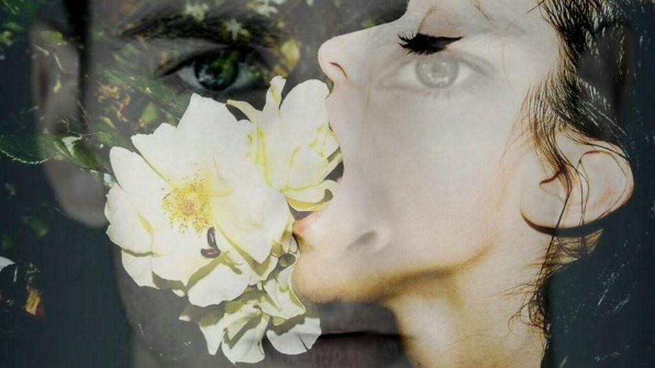 KellyBlatz and Crystalreed in Confluence Flowers Flower Tylershields Lisatanner Collage