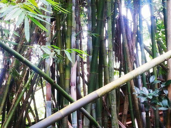 Nature Naturelovers Trees Bamboo Beautiful Nature Inspiring Bamboo Trees Hugging A Tree