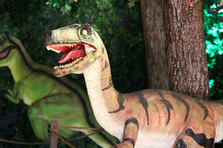 Close-up of dinosaur animal representation