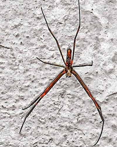 Aranha Spider Nature_collection Eyenaturelover Spiderphotography Aracnideos Smartphonephotography Phone Photography Mobilephotography Photography Mobilephoto