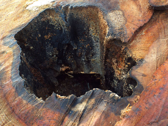 Cut Textured  Textures And Surfaces Tree Tree Trunk Wood Grain Backgrounds Close-up Day Full Frame Geology Macro Nature No People Outdoors Physical Geography Rock - Object Rough Textured  Tree Ring Wood - Material Wood Art Wood Carving Wood Texture Wood Texture Background