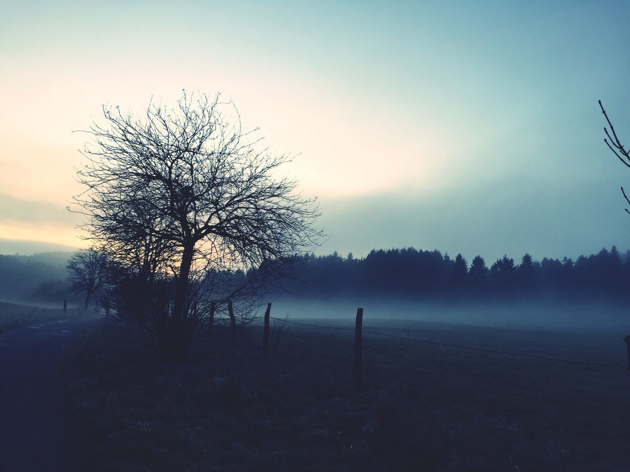 First Eyeem Photo Tree Fog Goslar