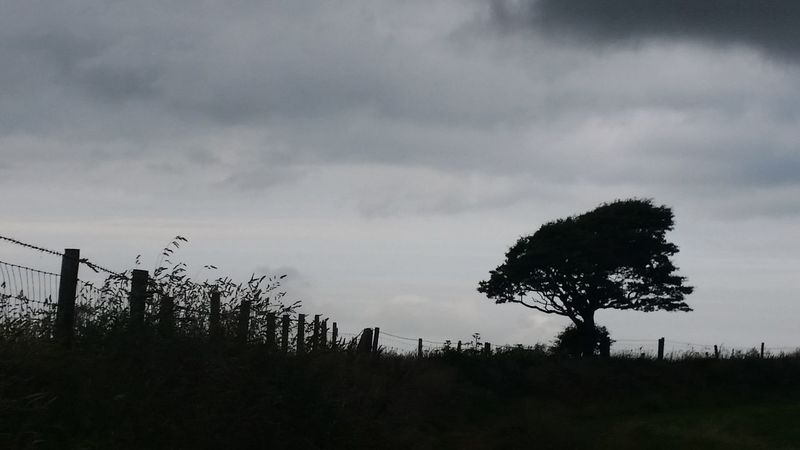 Another view of the tree Silhouette Tree Nature Outdoors No People Cloud - Sky Beauty In Nature Sky Landscape Day Wales Gray Grey Cloudy Day Cloud Clouds And Sky West Wales Samsung Galaxy S5 Welsh Welsh Countryside Cymru