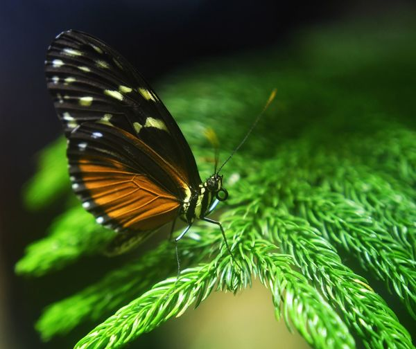 Butterfly 3 One Animal Animals In The Wild Animal Themes No People Butterfly - Insect