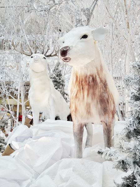 Snow Cold Temperature White Color Winter Animals In The Wild Animal Wildlife Nature Mammal Raindeers Statues Decorations Xmas Christmas Decoration Objects Still Life Celebrations Close-up