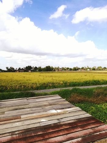 Tranquility Beauty In Nature Wood - Material Boardwalk Sky Agriculture Rural Scene Kedah Tranquility Wood - Material Kedahmalaysia Paddy Field Landscape Boardwalk Sky Cloud - Sky Rural Scene Plank Nature Agriculture Growth