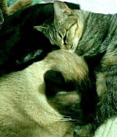 Cat Sleeping Cat