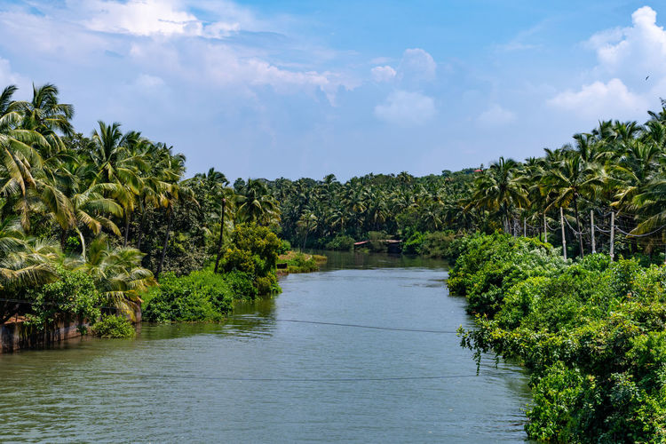 Scenic view of palm trees by river against sky