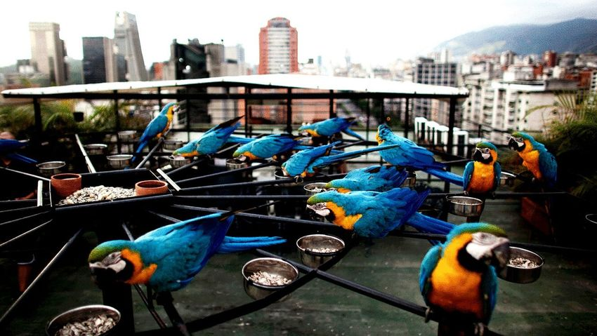 Guacamayas Caracas Caracas,venezuela Nature Exotic
