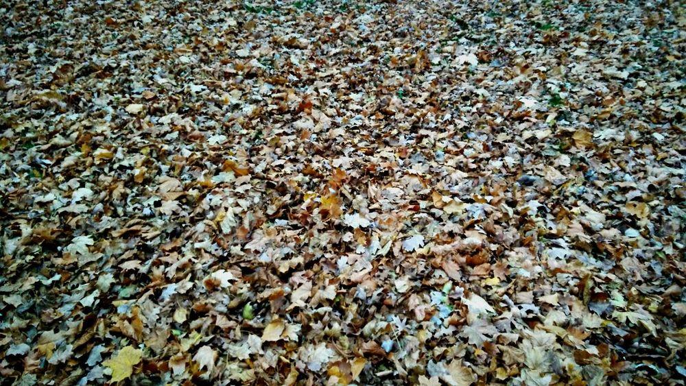 Autumn🍁🍁🍁 Autumn Colors Autumn Melancholy Autumn Leaves At The Park Walking Fall Leaves