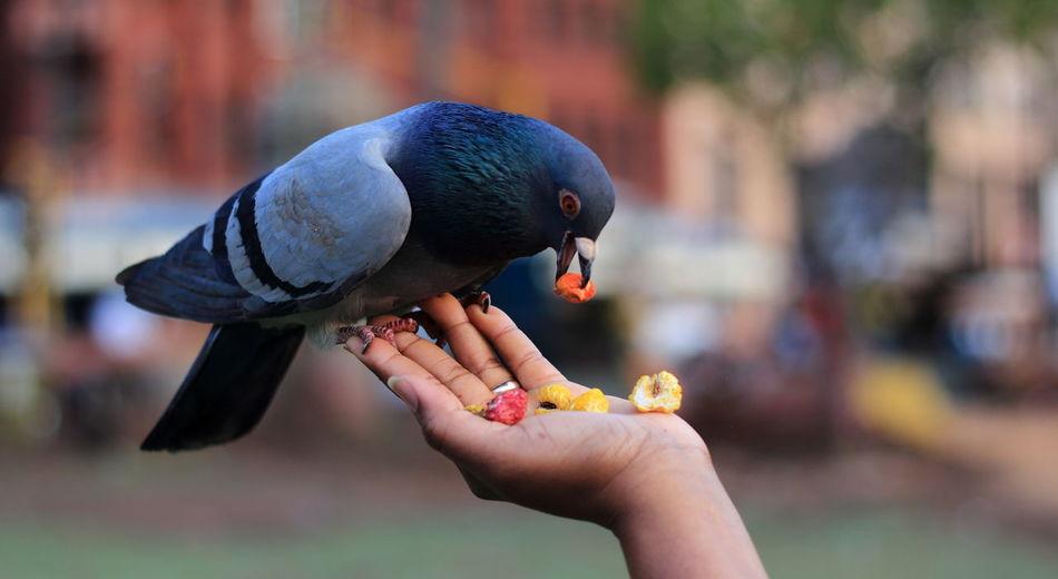 Close-up of woman hand feeding bird