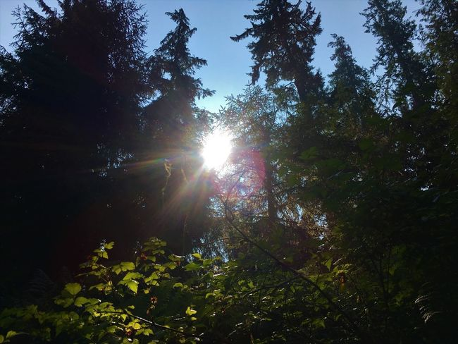 A window for the sun Tree Plant Sunlight Sky Sun Beauty In Nature Sunbeam Growth Bright Tree Canopy  Brightly Lit Streaming Sunny Scenics - Nature Tranquil Scene No People Forest Nature Low Angle View