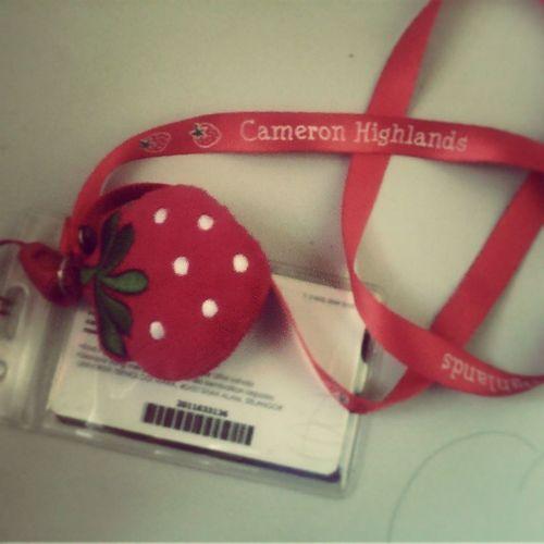 got this from adik ya yang cute molek ^_- Beauty Cute Strawberi Cameronhighlands fruitLover redLover