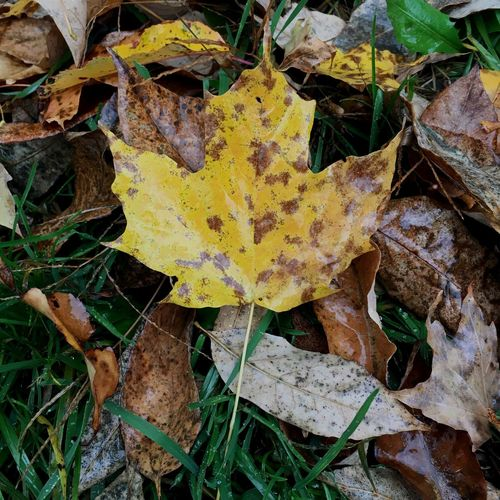 Leaf Ground Autumn Close-up No People Nature Yellow Day Green Grass Dead Leaves Wet Ground Wet Day Stem