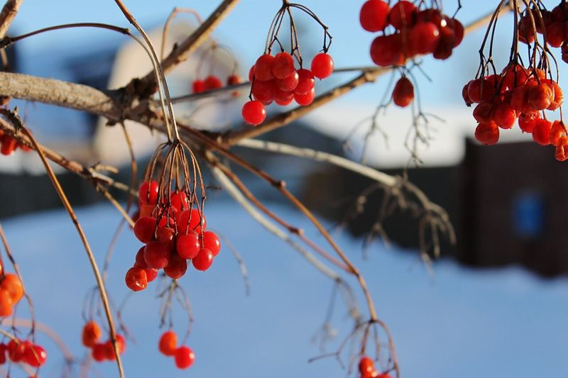 Winter Nature_collection