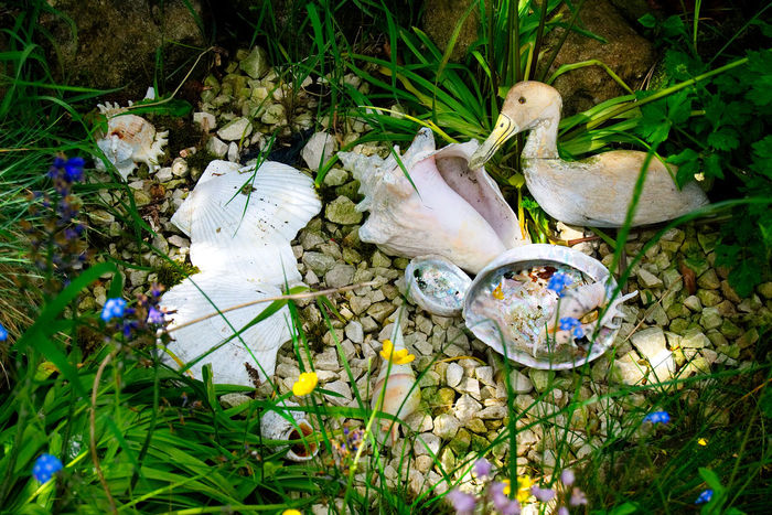 Clamshell Duck Figure Figureine Hidden Hidden Places Nature Out Of Place  Outdoor Photography Outdoors Rocks Seashells Live For The Story