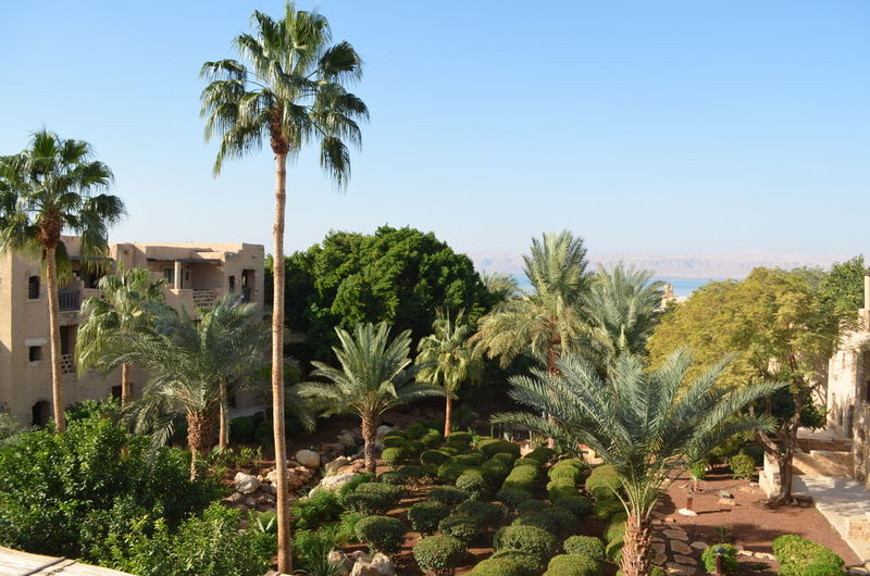 Vacation Moevenpick Vacations Jordanien Jordan Hotel Jordan Middle East Spa Traveling Travel Destinations Totes Meer