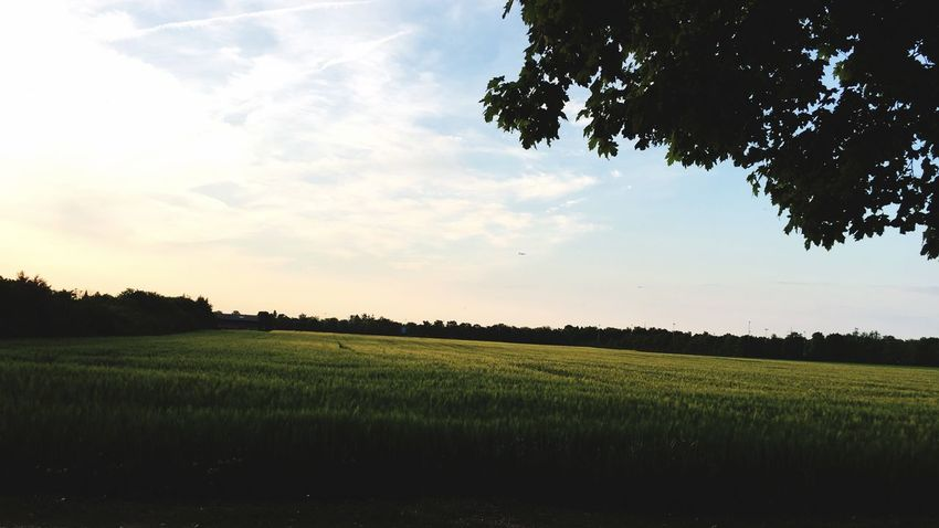 Schöner Tag in der Natur Agriculture Growth Tree Field Nature Landscape Sky No People Beauty In Nature Outdoors Day