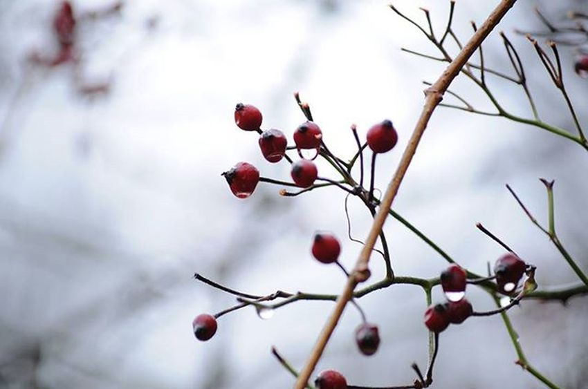 -BERRIE MACRO- Naturebeauty Nikon Naturephotography Naturelovers Nikonnofilter Nikonbest Instagram Instagood Photooftheday Macro Macro_perfection Macro_secrets Aperture Giantimagery