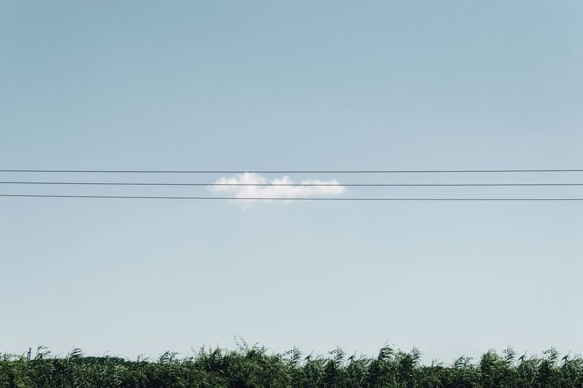 You can run, but you can't hide Cloud Cable Low Angle View Connection Electricity  No People Power Line  Nature Clear Sky Day Outdoors Sky Scenics Technology Electricity Pylon Beauty In Nature Tree EyeEmSelect The Week On EyeEm #FREIHEITBERLIN The Traveler - 2018 EyeEm Awards The Great Outdoors - 2018 EyeEm Awards