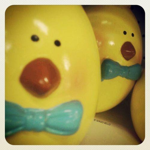 Chicken Littlechicken Lovely Photographylovers Eastereggs eggs