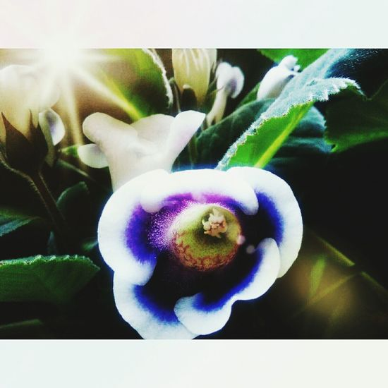 Flower :-*