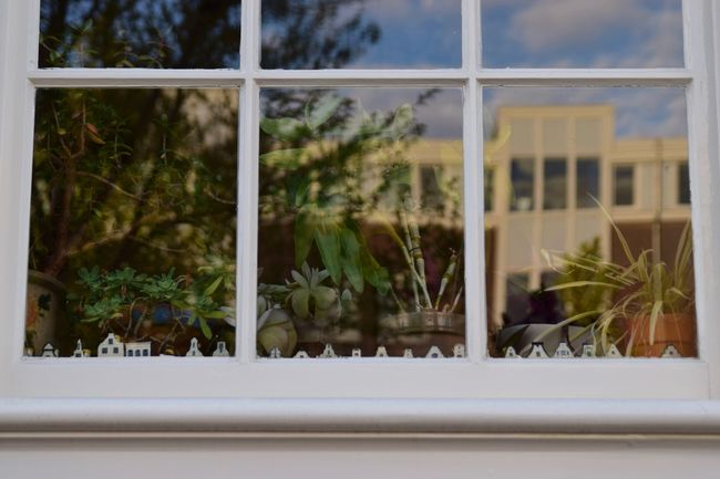 Amsterdam Architecture Building Exterior Day Delftse Blauw Growth KLM Looking Through Window No People Outdoors Plant Potted Plant Reflection Window Window Sill