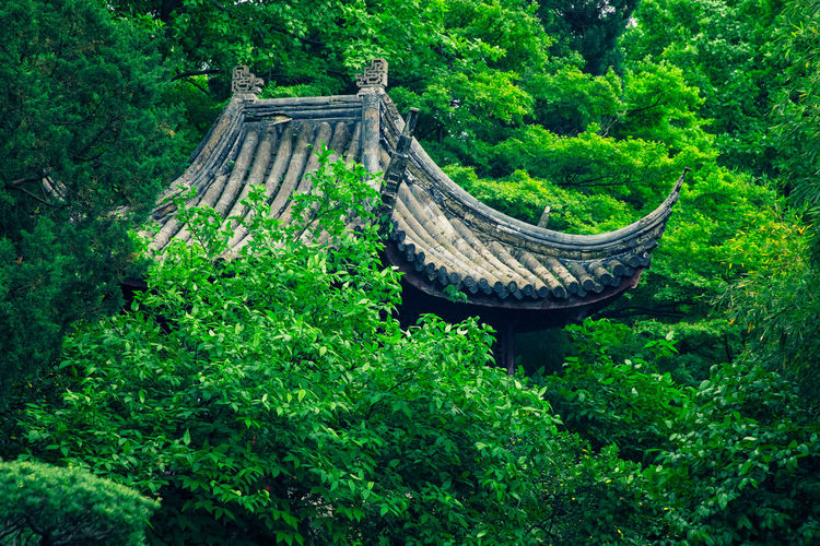 Gazebo roof Plant Tree Green Color Forest No People Architecture Day Outdoors Gazebo Roof