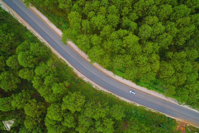 Flying High Road Green Color Travel Car Nature Highway Aerial View Day Tree Outdoors