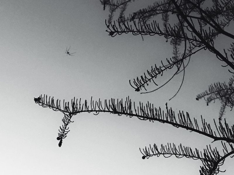 Flying Animals In The Wild Nature No People Sky Black And White Black & White OpenEdit EyeEm Gallery Animal Themes