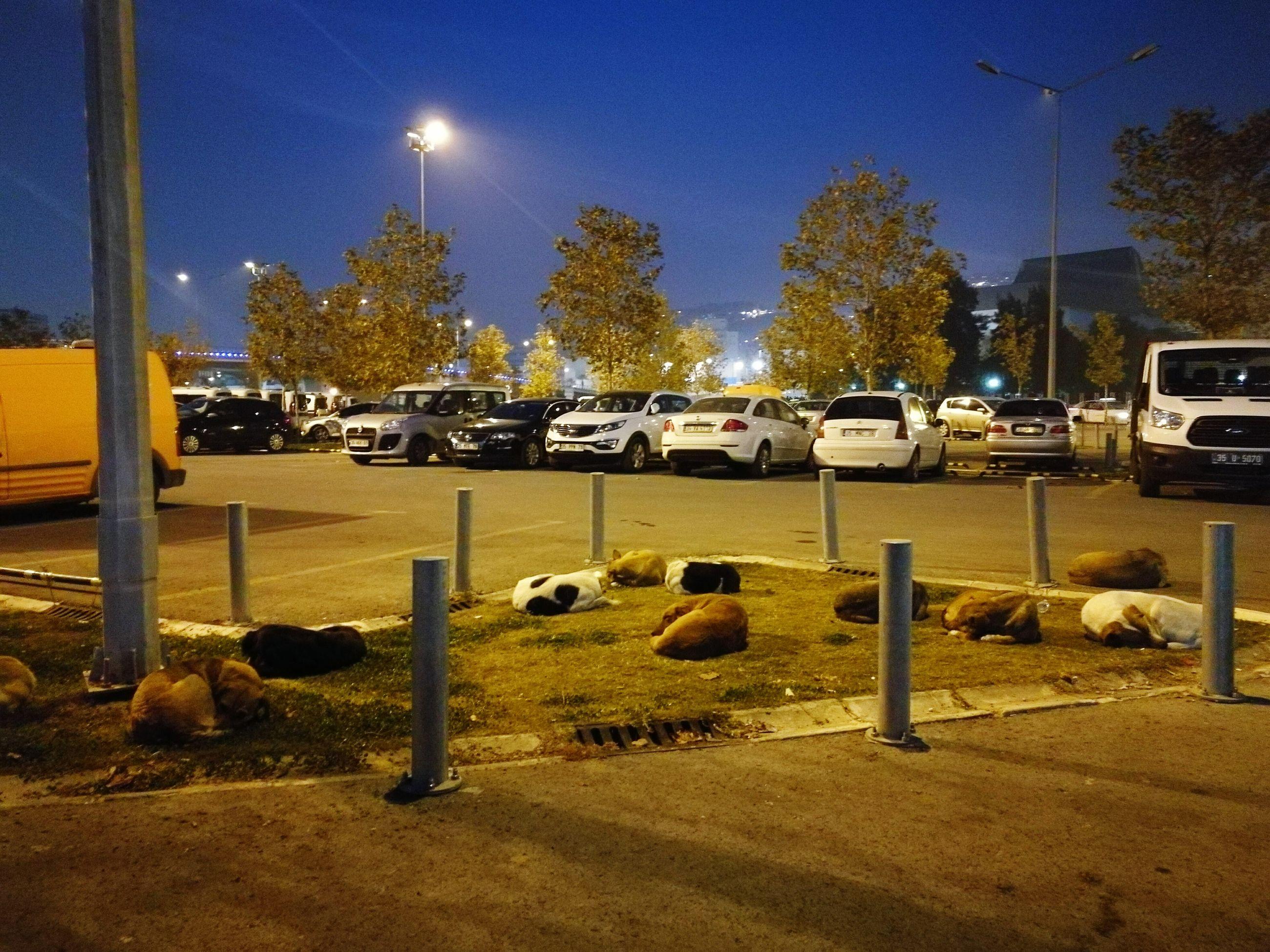 car, sky, no people, mode of transport, night, transportation, outdoors, land vehicle, illuminated, tree, nature