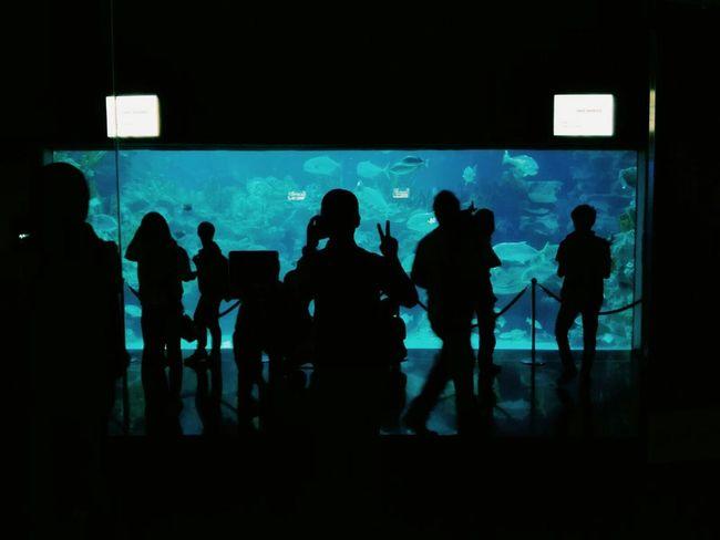 Aquaria Klcc Aquarium