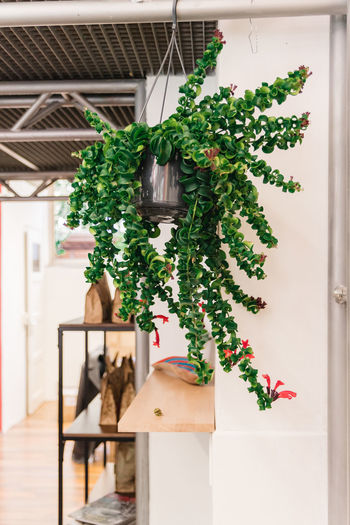 Plant Green Color Potted Plant Nature Growth Architecture Leaf Decoration Plant Part Day Built Structure House Building No People Indoors  Tree Window Close-up