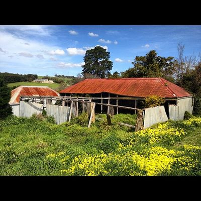 #rusty #shack_sniper #bellarine Rusty Shack_sniper Bellarine