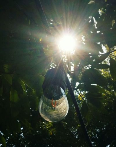 Tree Hanging Sunlight Low Angle View Light Bulb Day Leaves Light Sunbeam Life In City Contrast Of Nature
