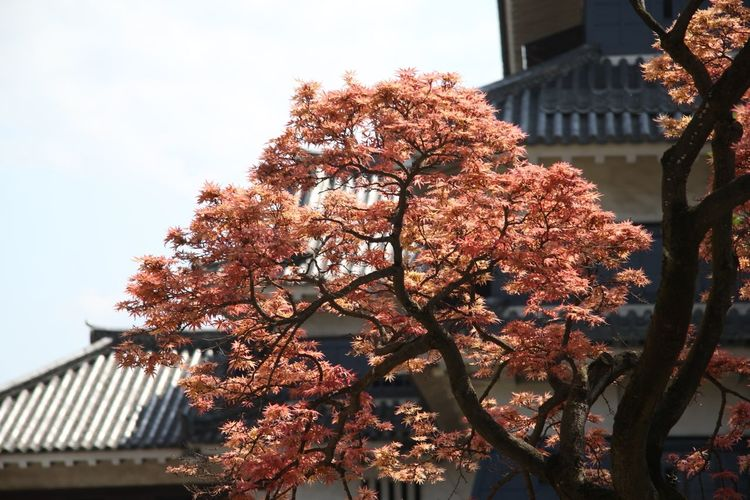Tree The Purist