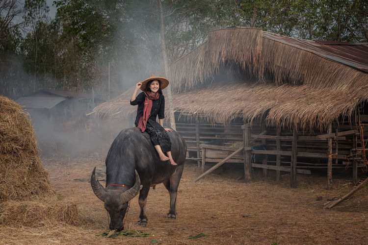 Woman sitting on buffalo at Farmland in countryside,Thailand. Day Domestic Domestic Animals Farm Field Herbivorous Leisure Activity Lifestyles Livestock Mammal Nature One Person Outdoors Pets Real People Vertebrate Women Young Adult